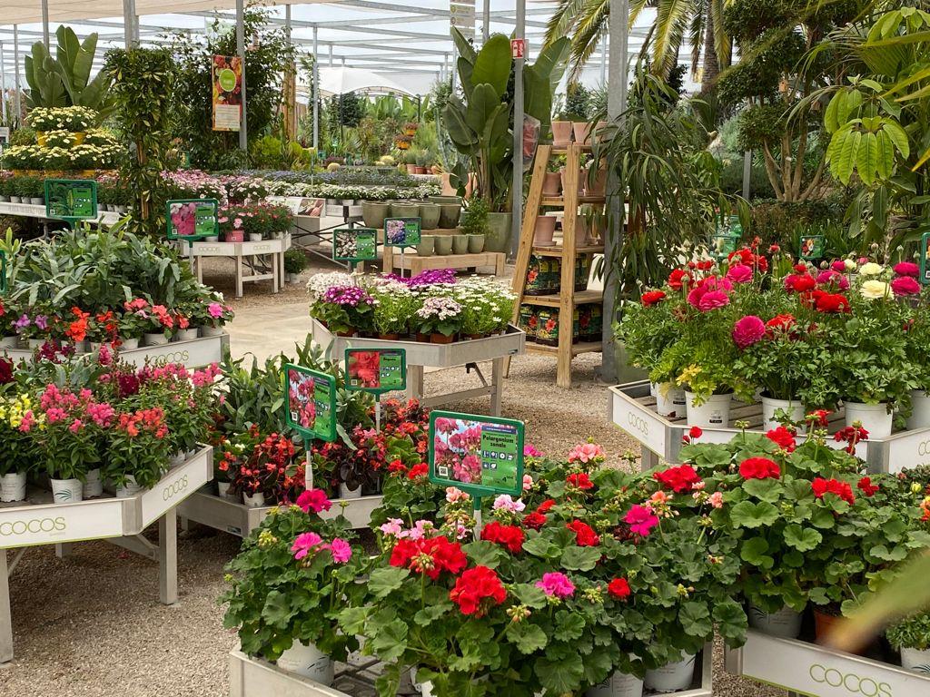 Mallorca Platinum Cocos Garden